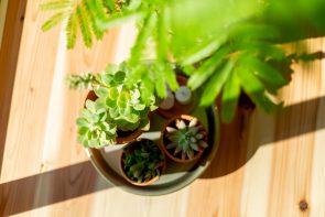 床に置いた植物